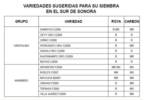 trigo-variedades recomendadas para Noroeste de Mexico 2012
